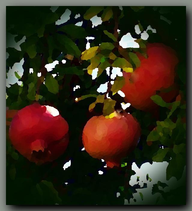 Granatapfelbaum600 rahmen,